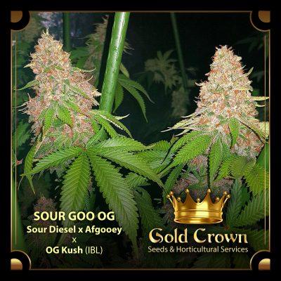 Seeds | Grow Like Joe