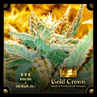 XXX OG - Gold Crown Seeds